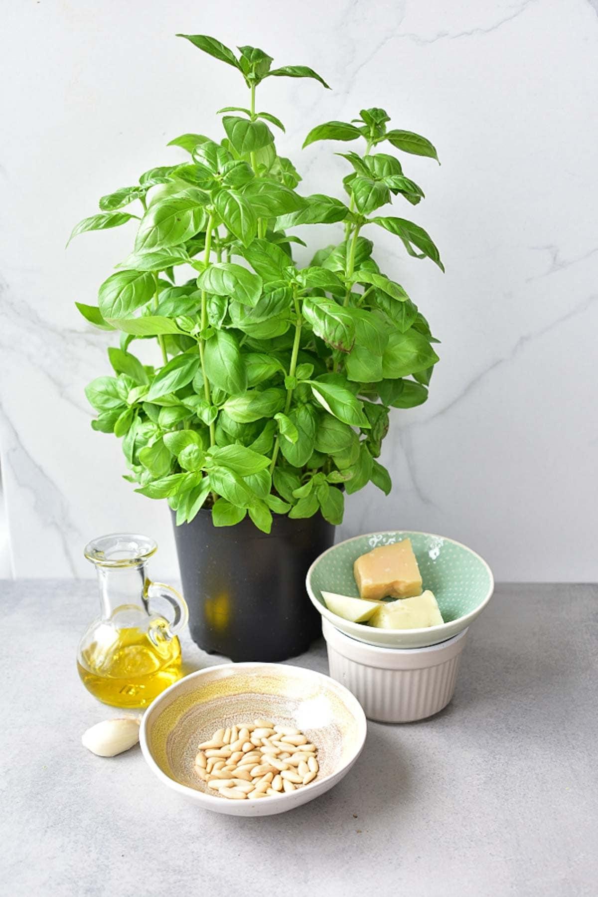 Basil pesto ingredients on a grey background.